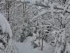 130203039_b_winterlandschaft
