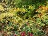 151011022_B_Herbstlicher Wald