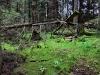 151011026_B_Bannwaldlandschaft