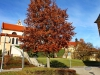 151108002_B_Kloster Reute