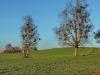 151206042_B_Bierkeller Misteln am Birkenbaum