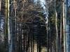 161204051_B_Herbstweg