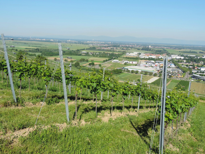 170527026_B_Aussicht Muellheim Vogesen Rheintal