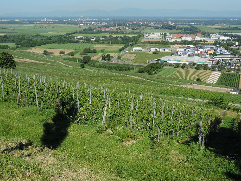 170527028_B_Aussicht Muellheim Vogesen Rheintal