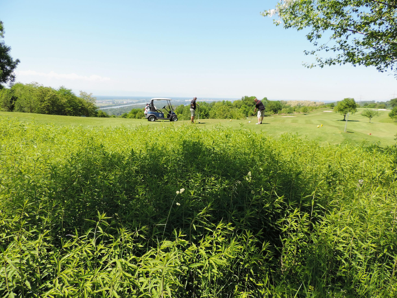 170527109_B_Golfplatz bei Bamlach
