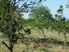 170528036_B_Kirschenplantage