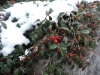 171203005_Blu_Winterlich