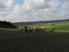 190621052_BTi_Schafe zwischen Erlach und Buechelberg