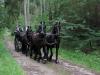 190622053_B_Kutsche im Wald