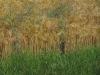 190623047_Blu_Gerste mit Strohblumen